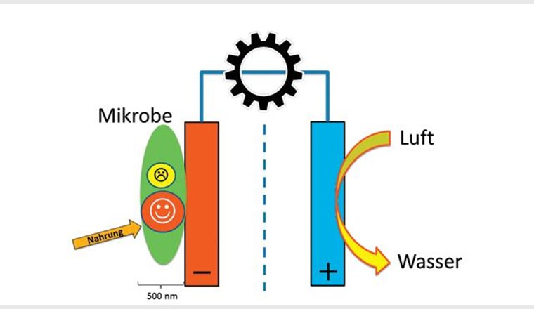 Mikrobielle Brennstoffzelle