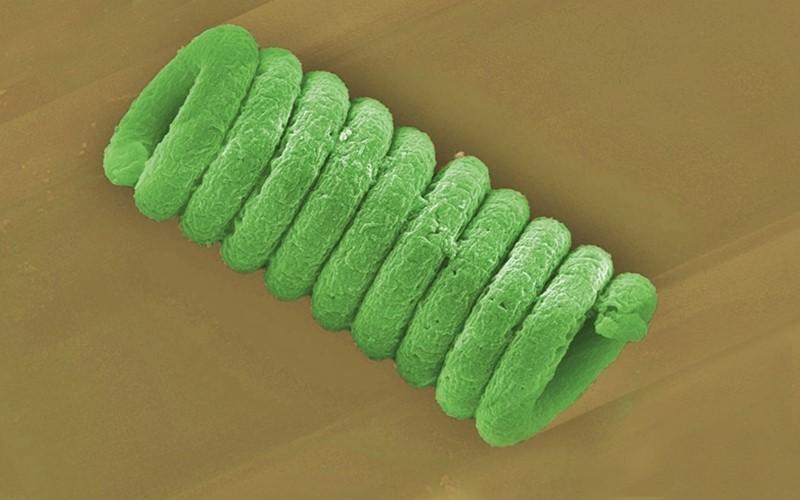 Forschende entwickeln Mini-Abwasserreinigung aus Blaualgen