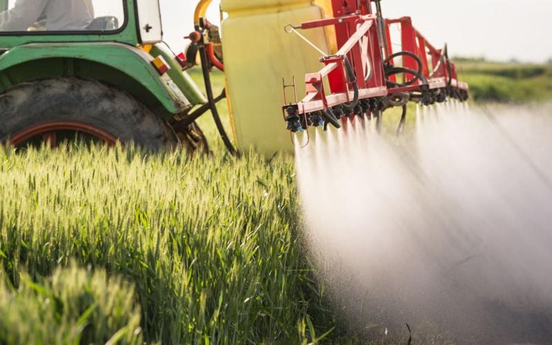 Berner Landwirte halten sich an das neue Chlorothalonil-Verbot