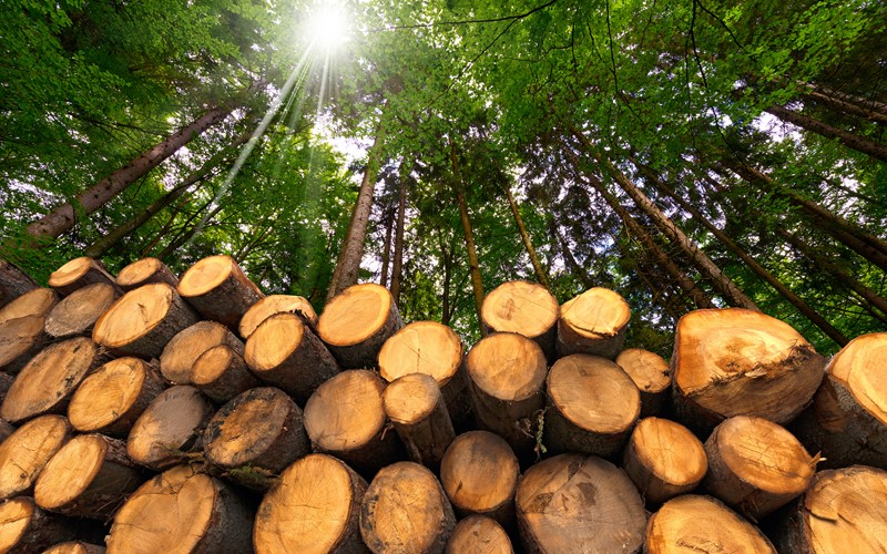 Zuger Waldbesitzer schützen Lagerholz neu ohne Pflanzenschutzmittel